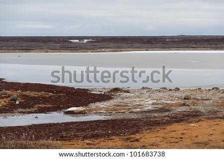 Tundra landscape, Churchill, Manitoba, Canada - stock photo