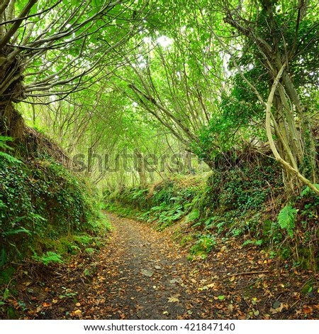 Tunnel-like footpath in a green hazel forest in Brittany, France - stock photo
