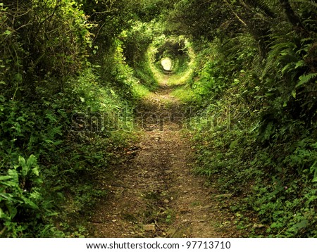 Tunnel -like path covered with bushes and trees with light at the end - stock photo