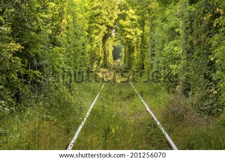 "Tunnel of ""love"" formed by trees in Romania - stock photo"