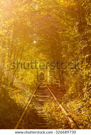 Tunnel of love - railroad tunnel surrounded by green trees, created by trees and passing train  - stock photo