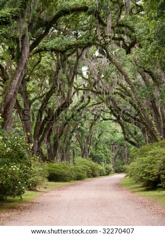 tunnel of trees - stock photo