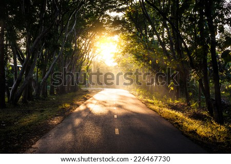 Tunnel of trees in thailand - stock photo