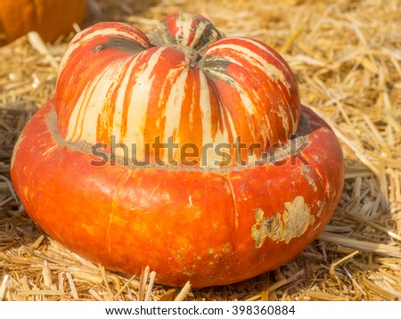 Turban Squash has colors that vary from bright orange, to green or white.  It has golden-yellow flesh and its taste is reminiscent to hazelnut.