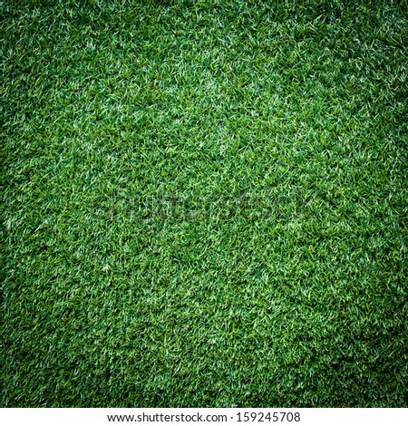 Turf Grass Texture and surface - stock photo