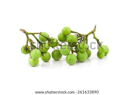 turkey berry isolated in white background - stock photo