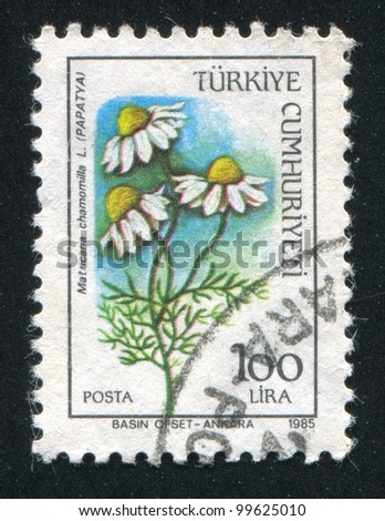 TURKEY- CIRCA 1984: A stamp printed by Turkey, shows daisy, circa 1984