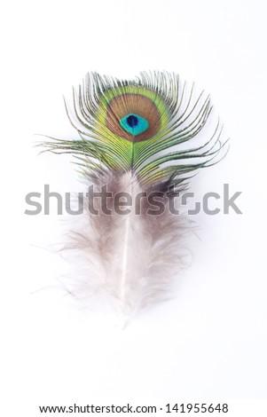 turkey feather - stock photo