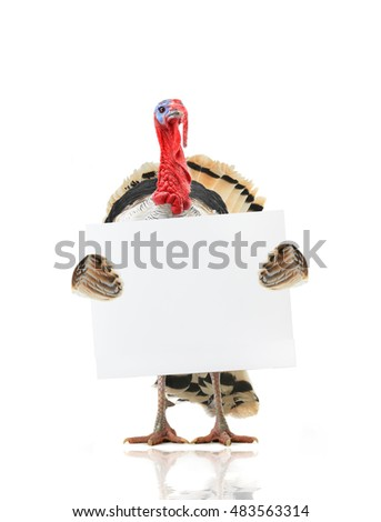 turkey with a leaf for text writing in day of thanksgiving
