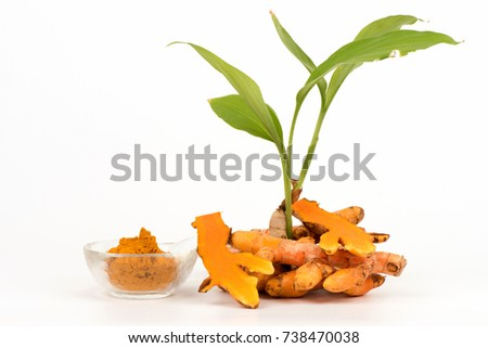 Turmeric tree, rhizome and powder have medicinal properties