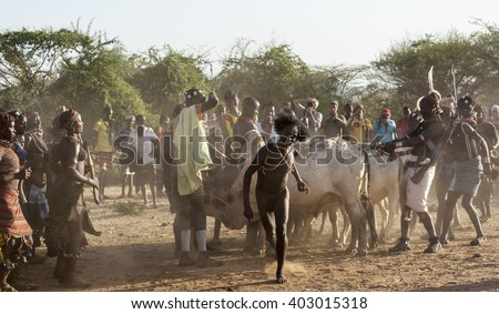 TURMI, OMO VALLEY, ETHIOPIA - DECEMBER 30, 2013: Unidentified young man jumps of the bulls.  Bull Jumping ceremony is a rite of passage into manhood in some Omo Valley tribes. - stock photo