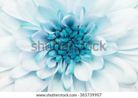 Turquoise annealed Chrysanthemum
