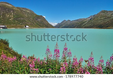 Turquoise blue waters in Silvretta Stausee Lake with beautiful flowers on foreground, Vorarlberg, Austrian Alps. - stock photo