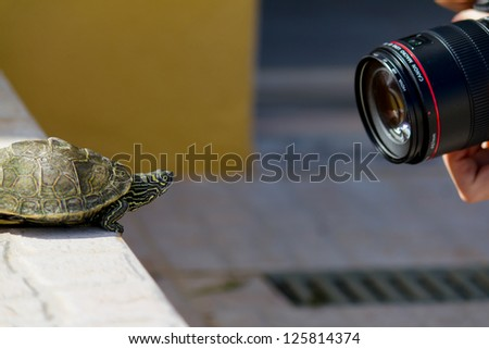 Turtle and Camera - stock photo