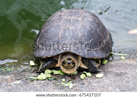turtle and cucumber