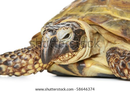 Turtle close-up isolated on a white background - stock photo