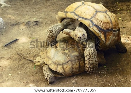 Turtle couples zoo stock photo royalty free 709775359 shutterstock turtle couples in the zoo publicscrutiny Choice Image