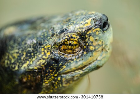 Turtle Head close up - stock photo