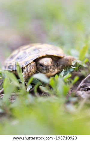 turtle in nature - stock photo