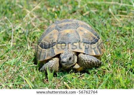 Land turtle Stock Photos, Images, & Pictures Shutterstock