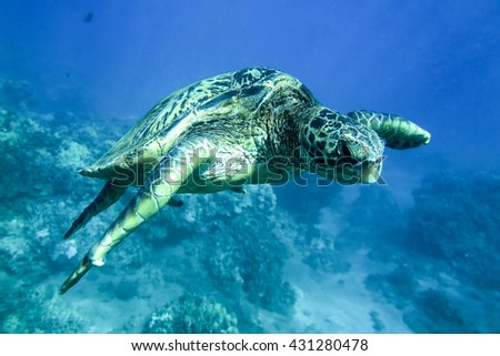 Turtle in the ocean under water - stock photo