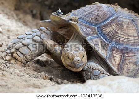 Turtle in the river - stock photo