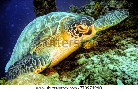 Turtle in tropical waters