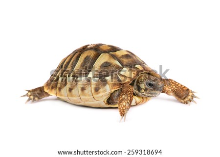 Turtle isolated - stock photo
