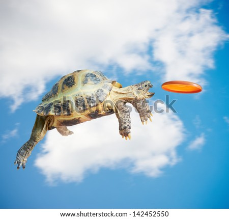 Turtle jumps and catches the frisbee - stock photo