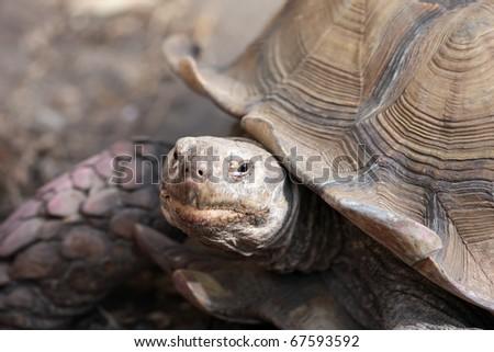 turtle look - stock photo