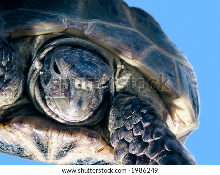 Turtle on a blue background - stock photo