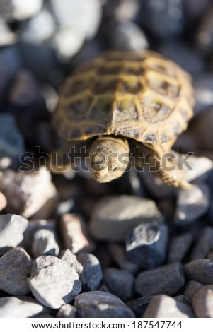 turtle on rocks in nature - stock photo