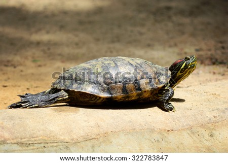 Turtle on the floor