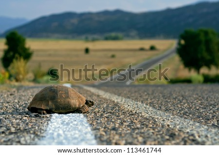 Turtle on the rural road - stock photo