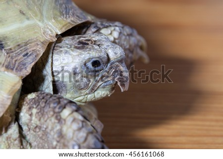 turtle on the wooden desk