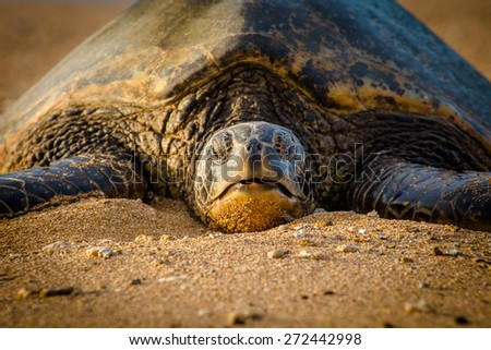 Turtle resting on the sand