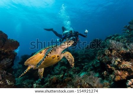 Turtle swimming along with a diver photograph - stock photo