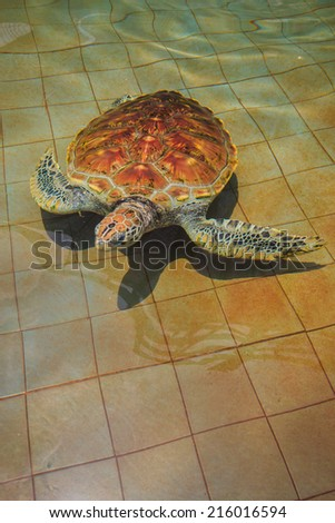 turtle swims in the pool of the turtle farm - stock photo