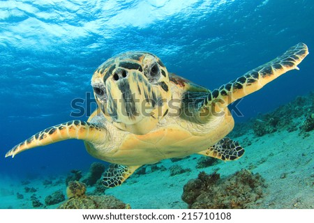 Turtle underwater - stock photo