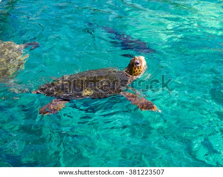 Turtle Views around the Caribbean island of Curacao