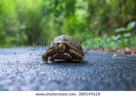 turtle walking