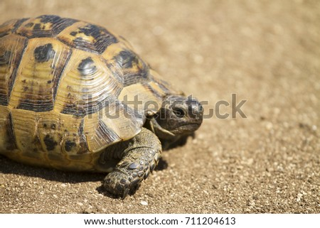 Turtle Walking on the Earth