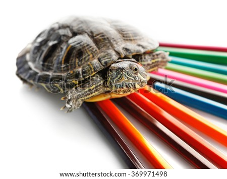 Turtle with colourful pencils isolated on white background - stock photo