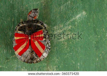 Turtle with red bow on green background, close up - stock photo