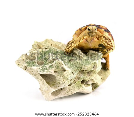 Turtle with stones isolated on white background. - stock photo