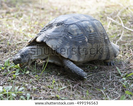turtle with the neck outside on the shell eating plants in the ground