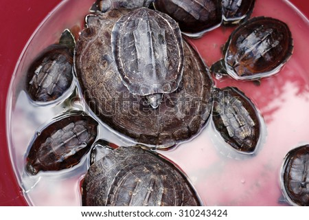 Turtles in a water bath - stock photo