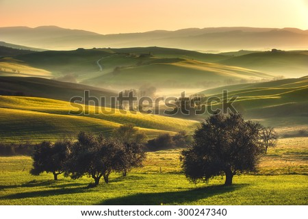 Tuscan fields and olive trees at sunrise in a mystical fog - stock photo