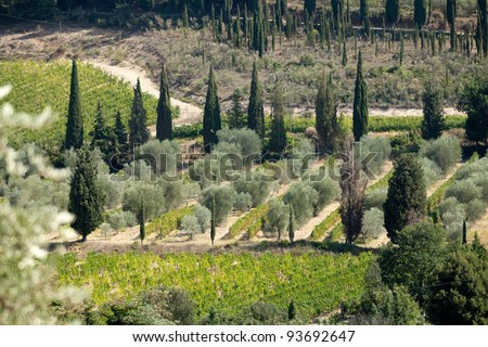 Tuscan landscape with vineyards, olive trees and cypresses