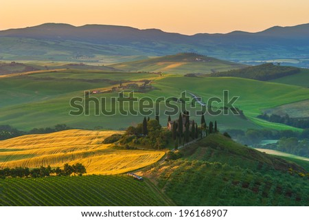 Tuscan olive trees and fields in the near farms, Italy